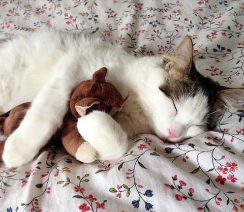 オススメの抱き枕